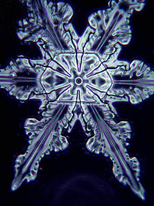 Flocon de neige vu au microscope