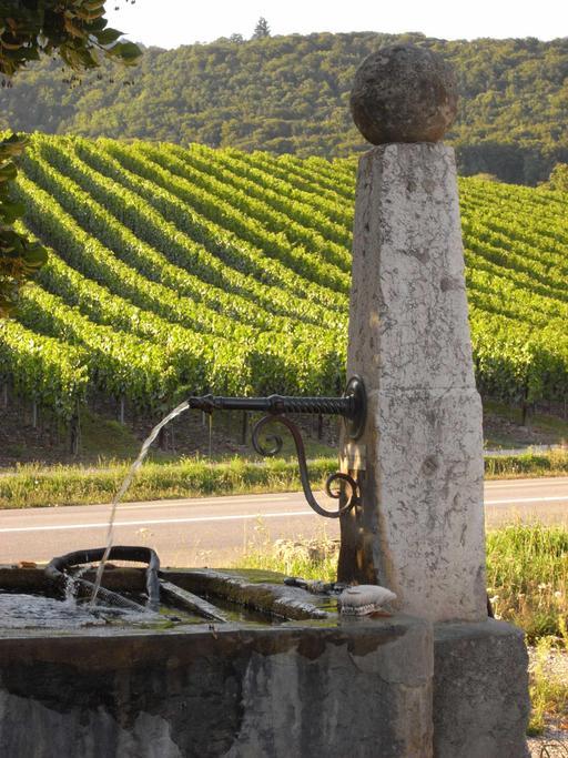 Fontaine-abreuvoir dans le vignoble jurassien
