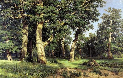Forêt de chênes le soir