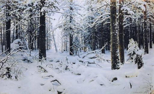 Forêt de pins en hiver