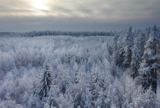 Forêt de sapins en hiver en Estonie