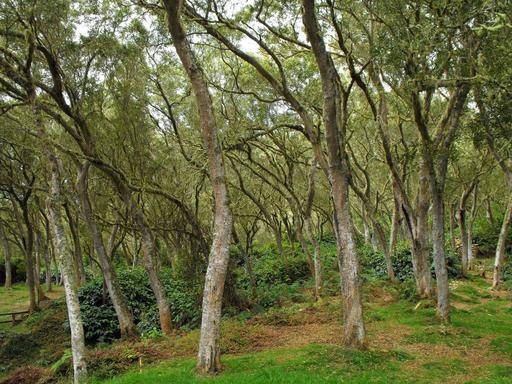 Forêt de tamarins des hauts dans un parc national
