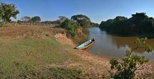 Forêt galerie au Venezuela