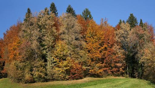 Forêt mixte de feuillus et de conifères