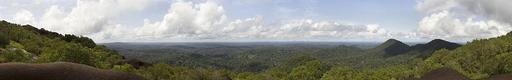 Forêt primaire des Nouragues en Guyane