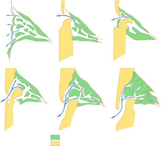 Formation du bassin d'Arcachon