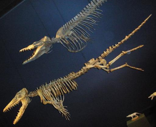 Fossiles de baleines
