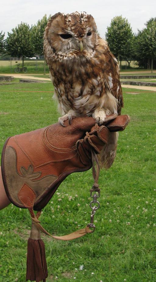 Gant de fauconnerie