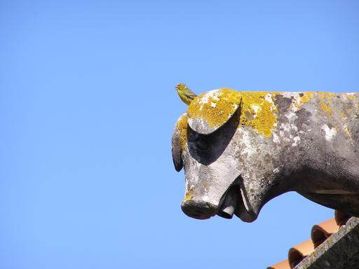 Gargouille à tête de cochon au Portugal