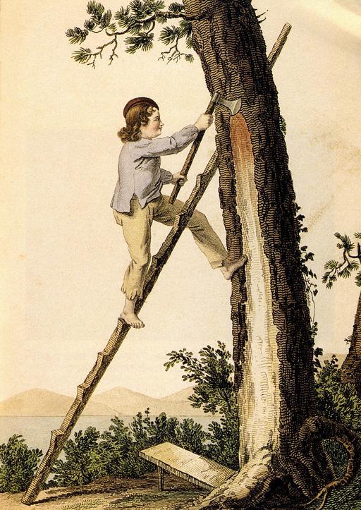 Gemmeur du XIXème siècle