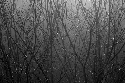 Gouttes de rosée dans le brouillard