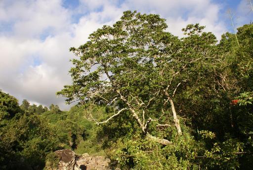 Grand natte à La Réunion Réunion