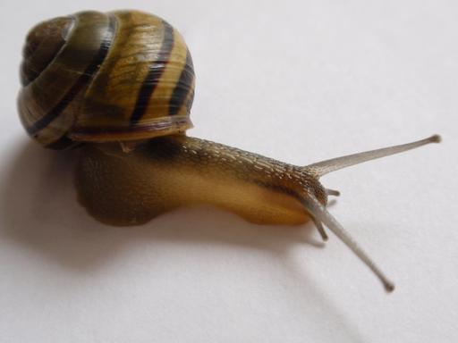 Gros plan sur un escargot