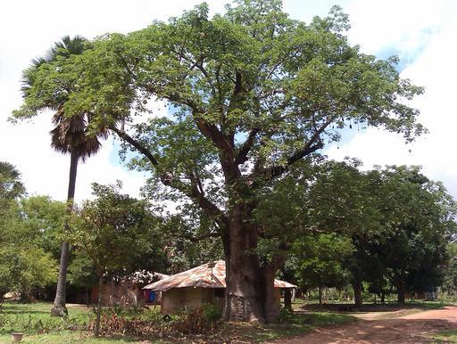 Habitat traditionnel au Sénégal