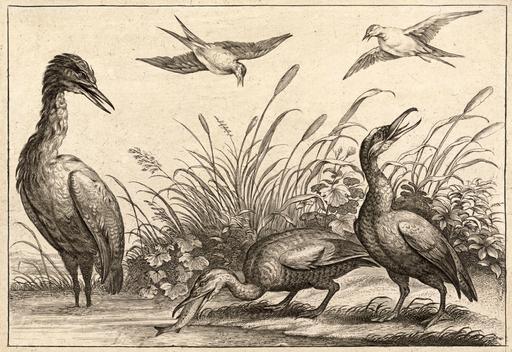 Hérons au bord de l'étang