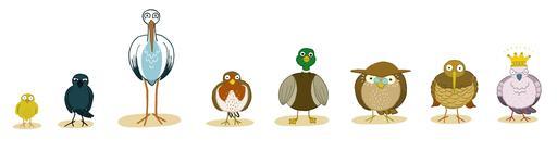 Huit oiseaux de face