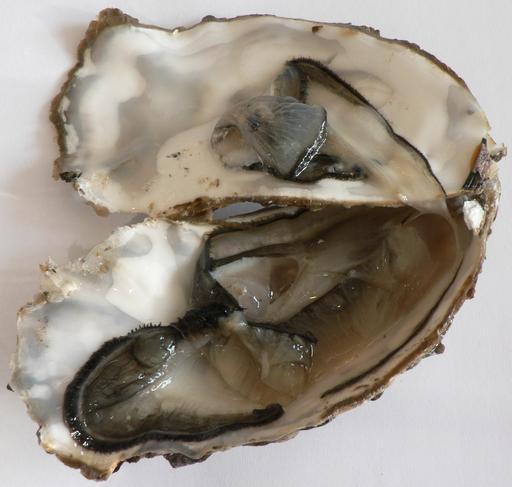 Huîtres de Marennes-Oléron