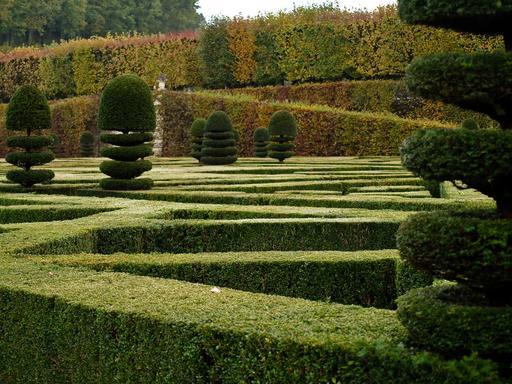 Ifs et buis dans le jardin de Villandry