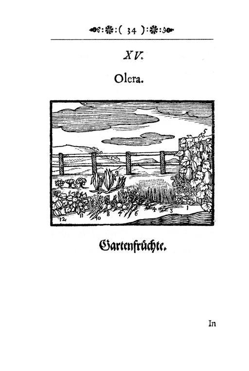 Image des légumes du jardin en 1658