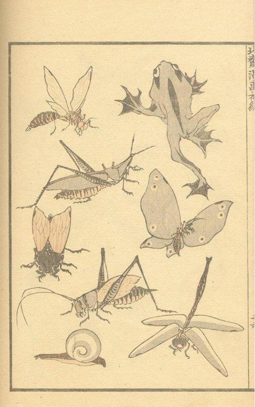 Insectes, escargot et grenouilles