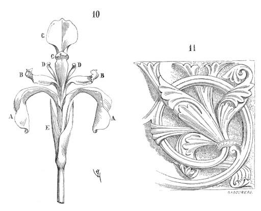 Iris et fleur de lys