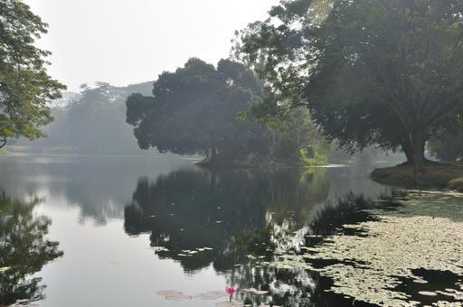 Jardin botanique en Inde