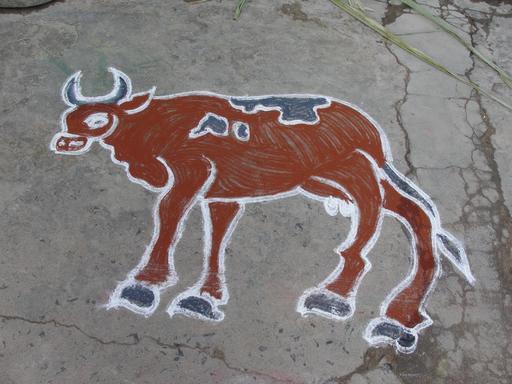 Kolam de vache