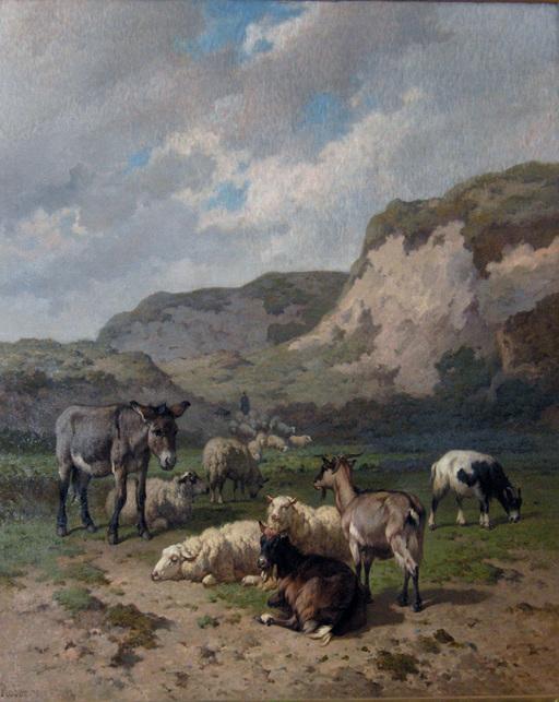 L'âne et le troupeau de moutons