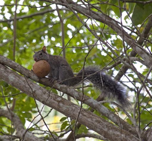L'écureuil affamé