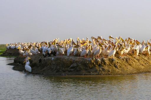 L'île des Pélicans au Sénégal