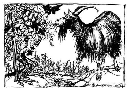 La chèvre et la vigne