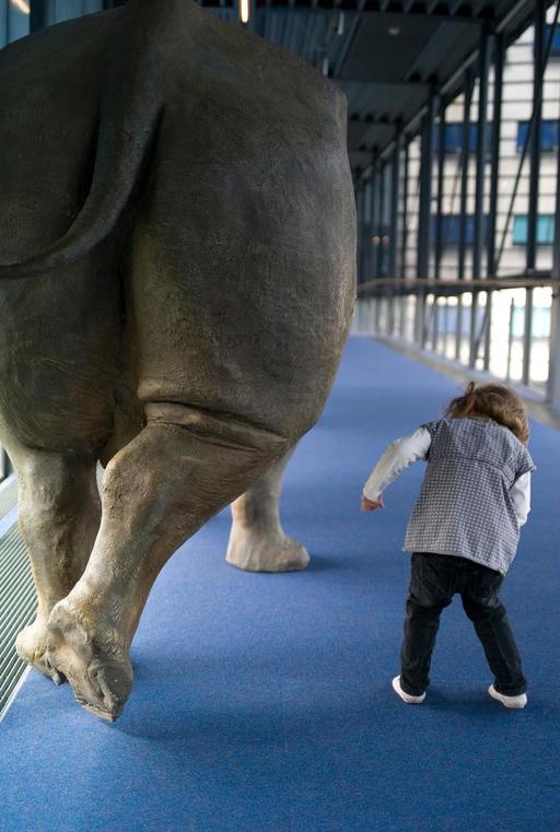 La fillette et le rhinocéros