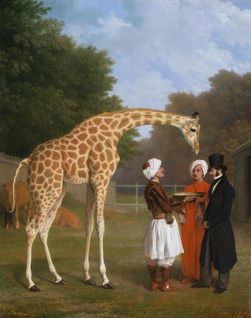 La girafe de Nubie