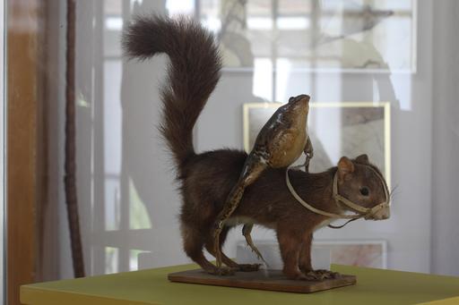La grenouille et l'écureuil