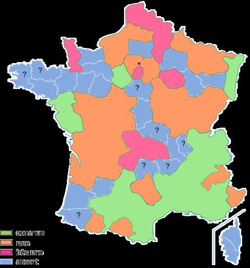La grenouille rieuse en France en 2003