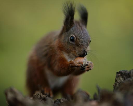 La noisette et l'écureuil