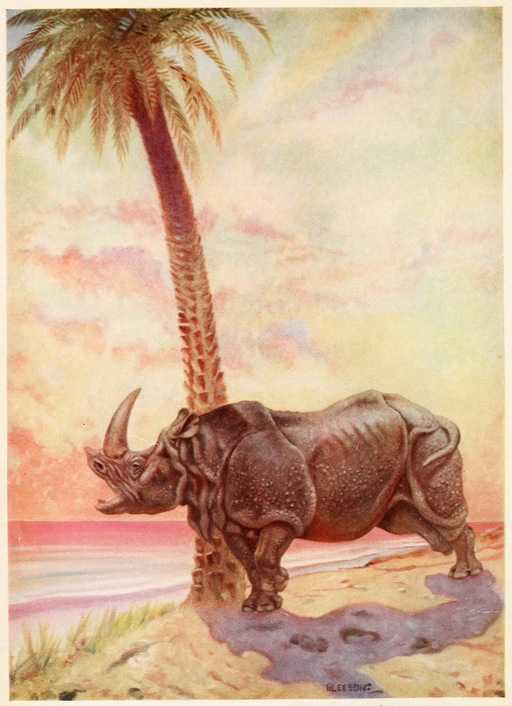 La peau du rhinocérox