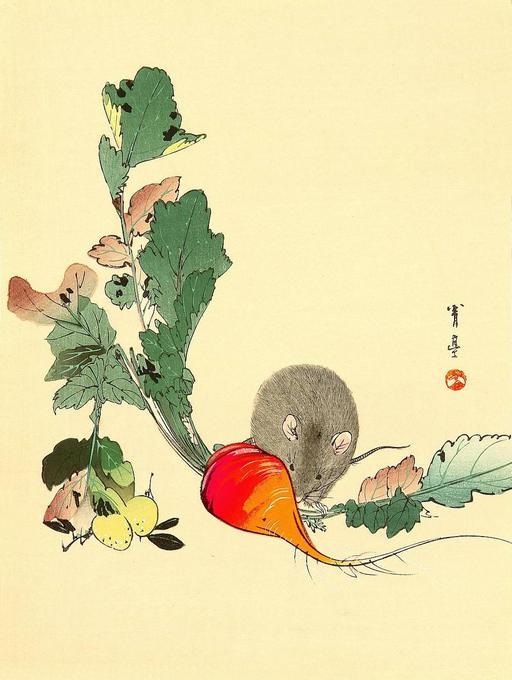 La souris et le radis rouge