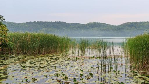 Lac de Scharmützel dans le Brandebourg
