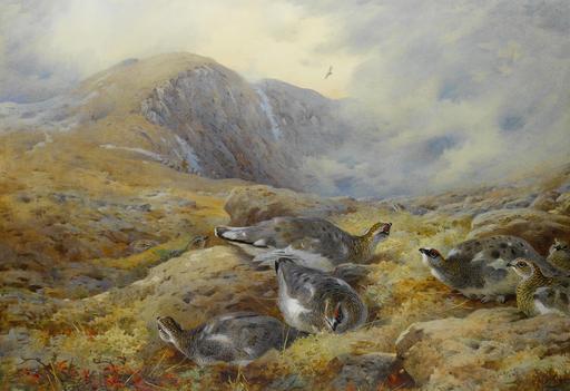 Lagopèdes alpins