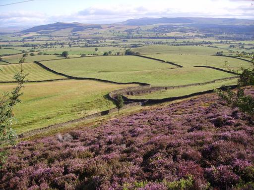Lande de bruyère en Angleterre