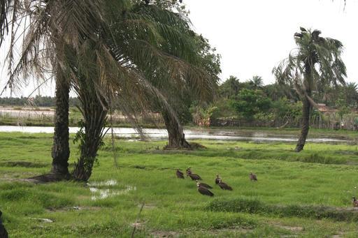 Le bolong au Cap Skirring en Casamance