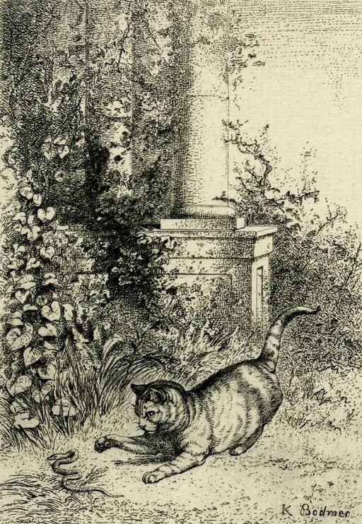 Le chat et la couleuvre