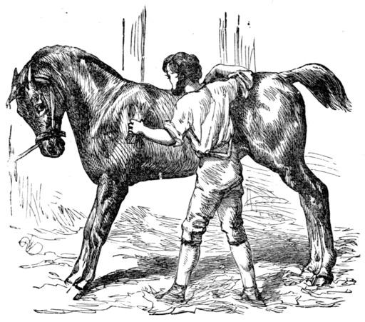 Le cheval et le palefrenier