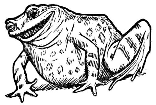Le conte de la grenouille