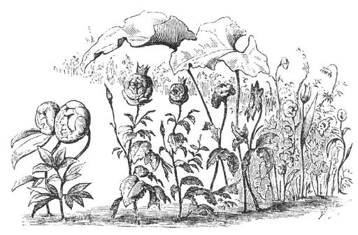 Le conte des fleurs de la petite Ida