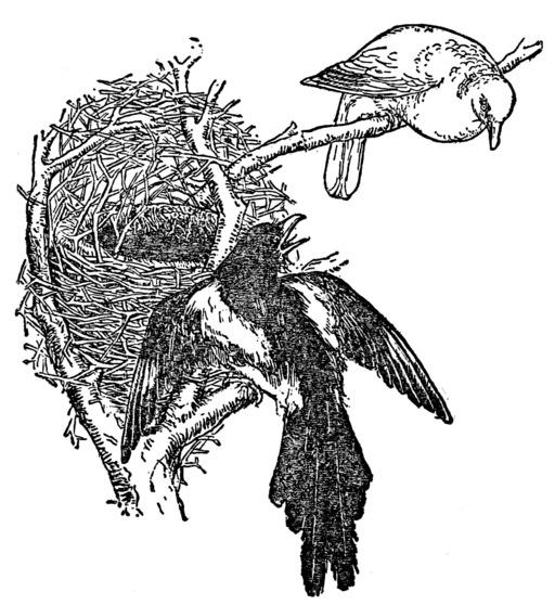 Le conte du nid de la pie