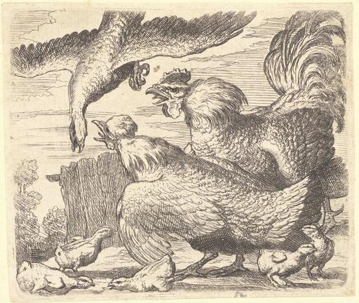 Le coq et la poule défendent leurs poussins