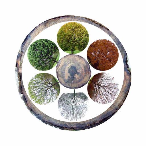 Le cycle des six saisons de l'arbre