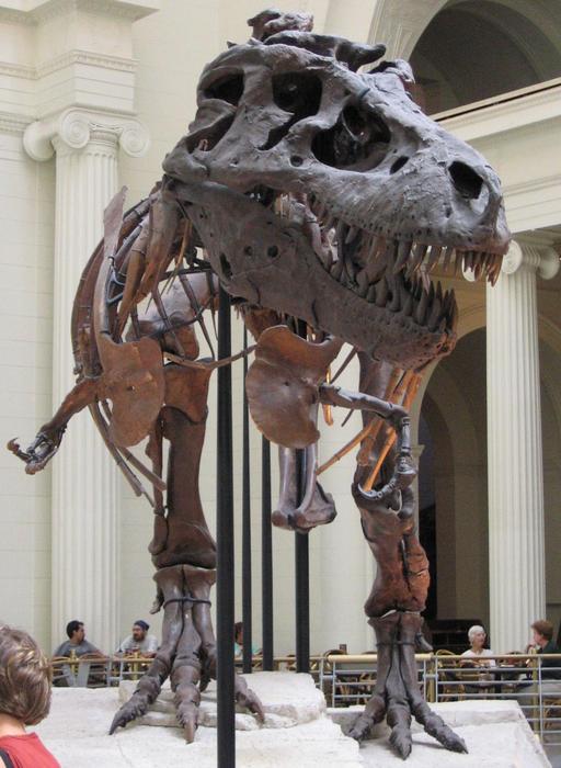 Le dinosaure Sue